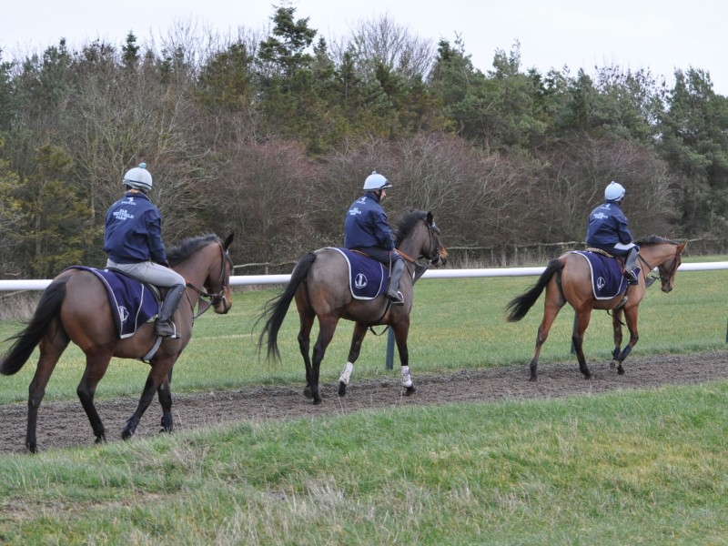 All-weather flat gallop