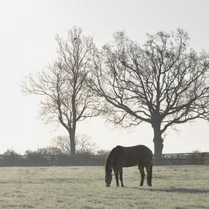 Far Westfield Farm