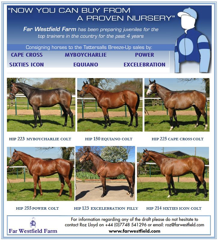Guineas Sale add 2016