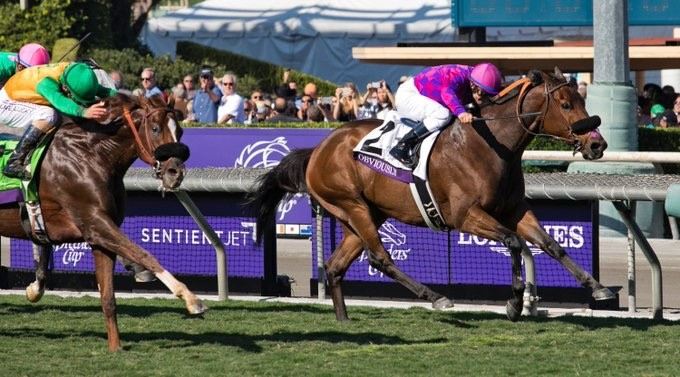 obviously-breeders-cup-win